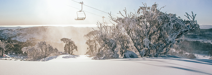 Explore Perisher Snow with Chairlift Trees
